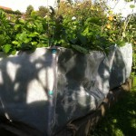 Environmesh protecting vegetable crops