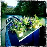 The front of a narrowboat, filled with flowers and herbs