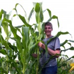 Sam standing amongst the tall sweetcorn
