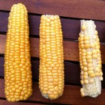Three cobs of corn